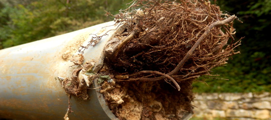 5 Common Causes Of Sewer Line Damage